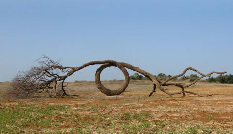 """""""The loop"""" 2010 wood 200 x 700 x 250 cm Green Gallery, Israel"""