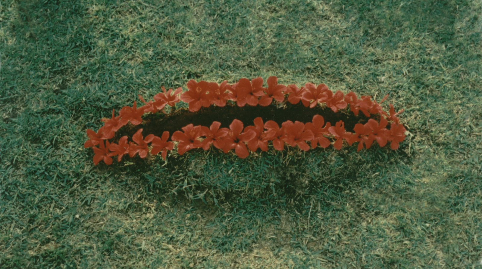 Cut-1987.Soil-grassflowers.150-x-60-x-38-cm.-Givat-Brener